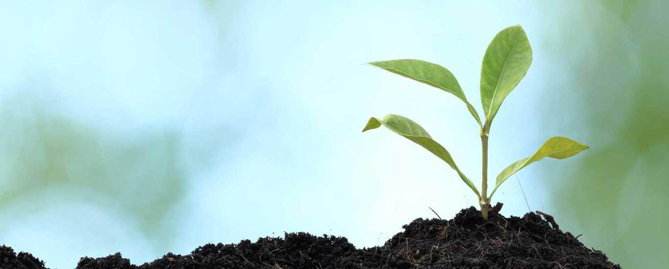 mindfulness foundation ireland gerry cunningham cbt training sapling seed seedling flower spring bud