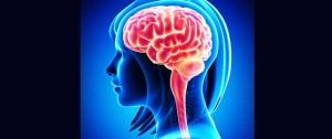 mindfulness clinic brain oin mindfulness female brain illustration