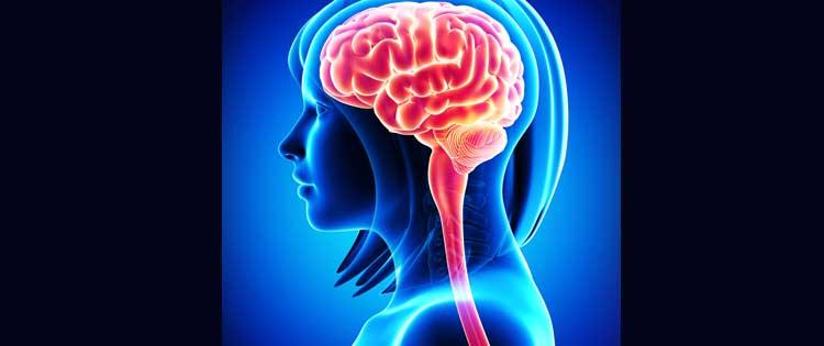 mindfulness clinic stress reduction brain mindfulness female brain illustration